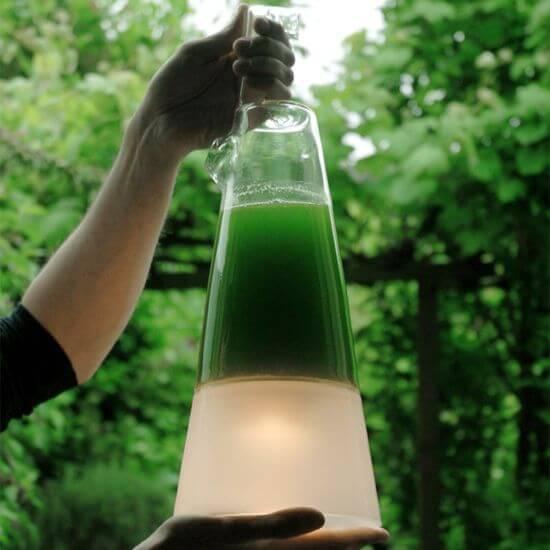 Lámpara de algas